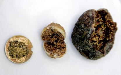 Jordan, Neolithic Figs
