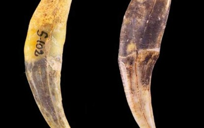 Neanderthals, More Intelligent than Previously Thought