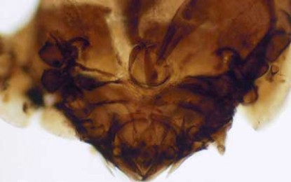 Inca: Excrement Eating Mites Help Unlock the Rise and Fall