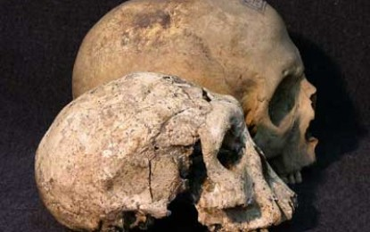 Dmanisi Homonid Skeletons