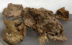 Fossil Faeces provide America's oldest human DNA