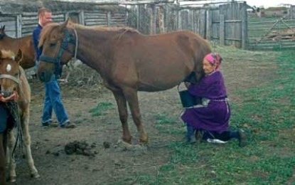 Early Date for Horse Domestication in Kazakhstan