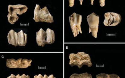 Neanderthals, Dental Dating of Demise