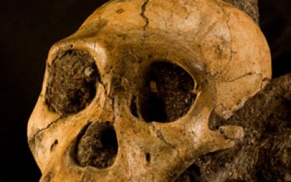 Hominid New Species