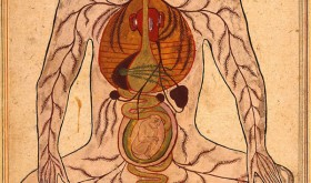Illustration of the female reproductive cycle, from Manṣūr's anatomy (Tašrīḥ-i Manṣūrī), 1656