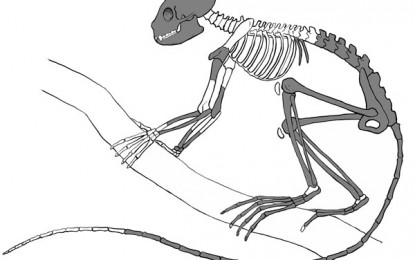 World's oldest primate skeleton found