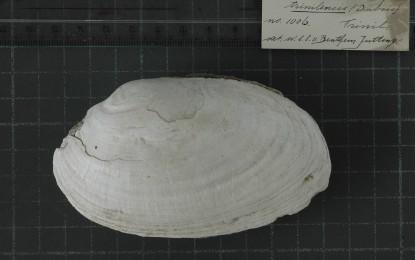 Earliest Human Engraving