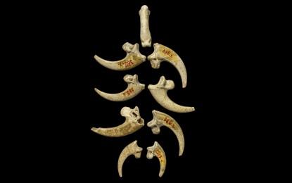 Eagle jewellery