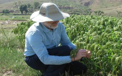 Millet missing link