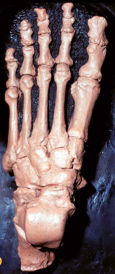 Oldest Foot Wear Date from the Neandertals?