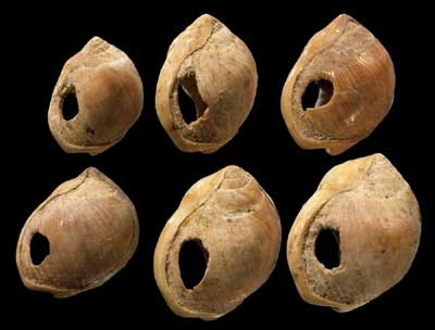 Shell Beads from Blombos Cave, South Africa